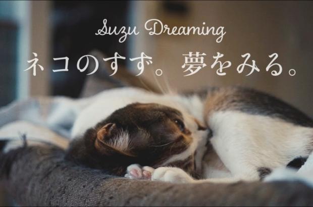 ネコのすず。夢をみる。