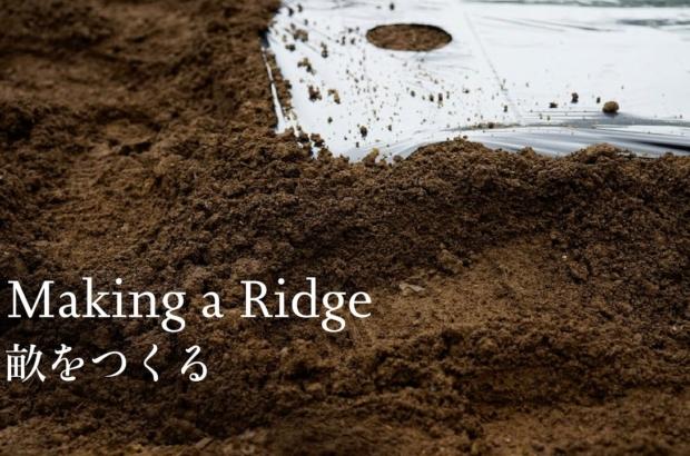 Making a Ridge